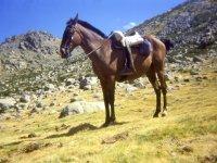 Listo el caballo para la experiencia
