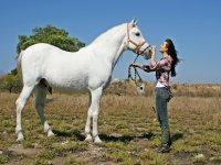 Momentos con caballos