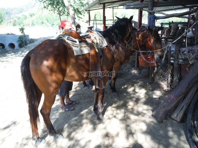 Docile horses