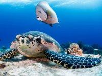 Observa las tortugas snorkeleando
