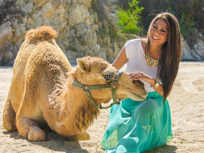 Experiencia única con los camellos de BC