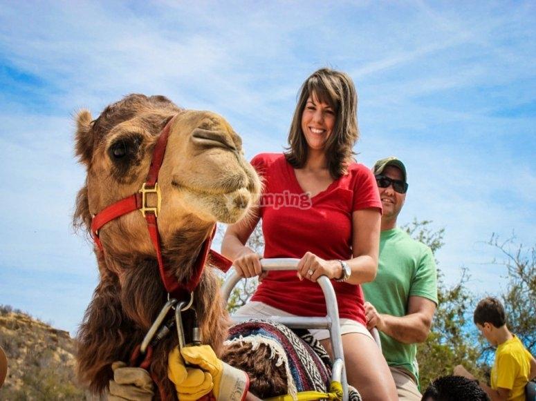 Disfruta el paseo en camello