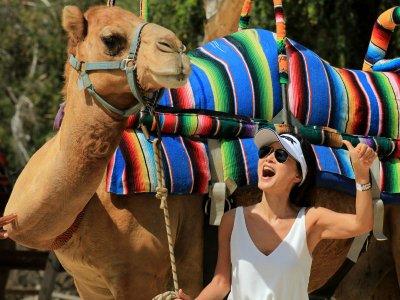 Paseo en camello en desierto y oasis Los Cabos 4 h