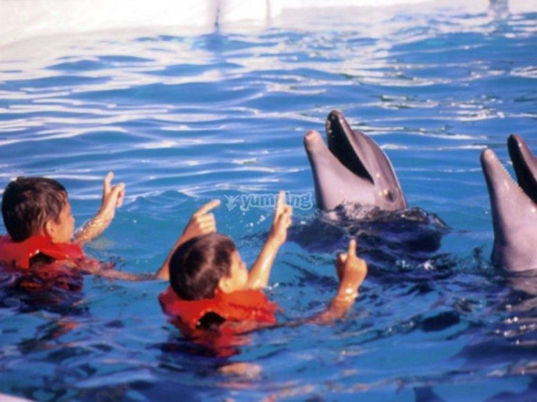 nada con delfines en pareja