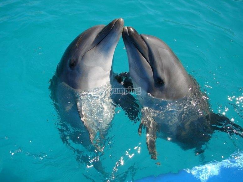 Conoce a los delfines