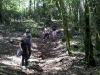 caminata en le bosque