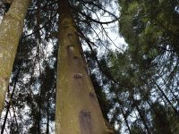 Subiendo al árbol