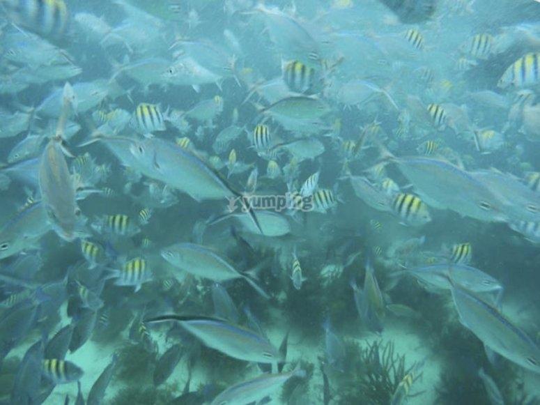 Diversidad de especies marinas