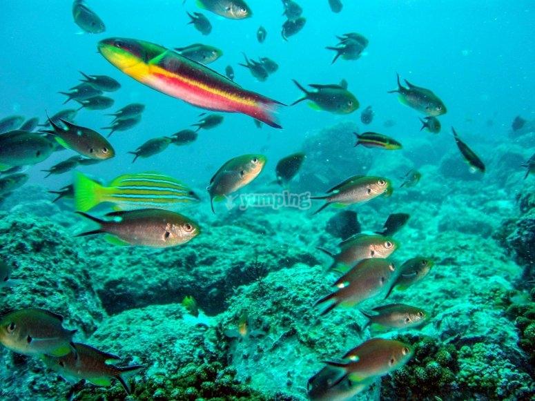 Enjoy these marine landscapes