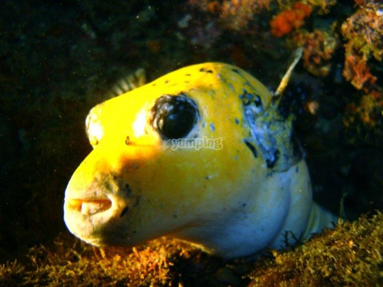 Vida marina de Ixtapa