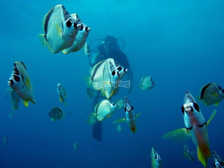 Descubre diferentes especies de peces