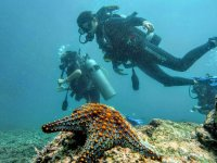 2h diving session in Ixtapa