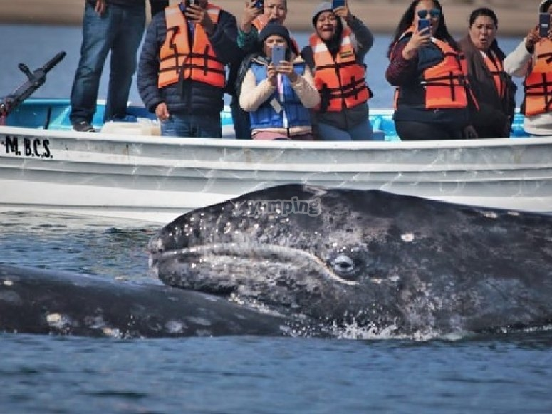 Saludando a la ballena gris
