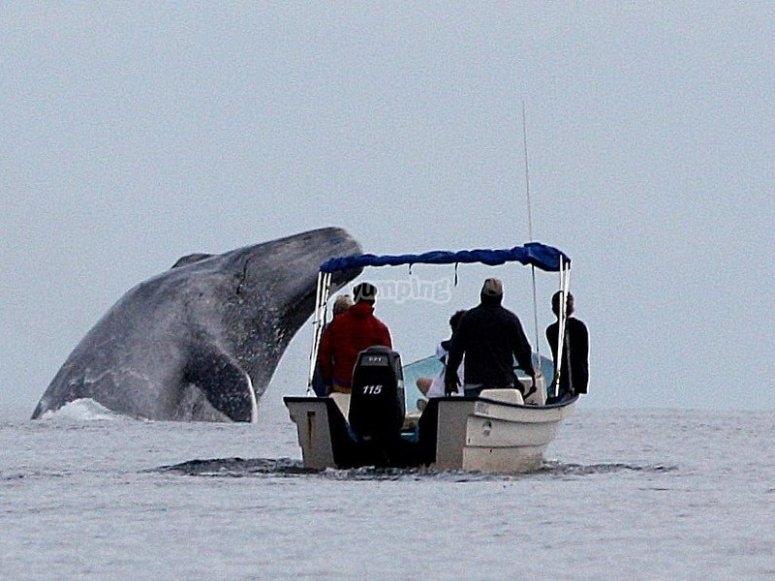 Barco ballena
