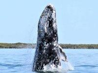 Observación de Ballenas en Loreto por 7 horas