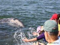 Whale watching Baja California Sur, 7 hours