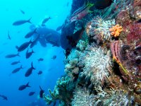 Recreational Diving in Loreto From Boat