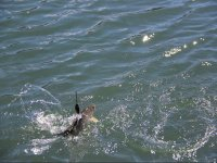 Pesca con cana