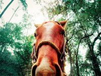 galloping in the forest
