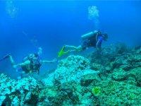 Buceo en Los Cabos