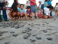 liberando tortugas en familia