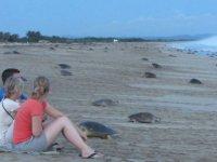Beautiful turtle species