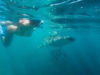 Snorkel with whale shark in La Paz