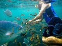 Enjoying life under the sea