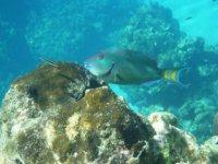 Beautiful fish under the sea