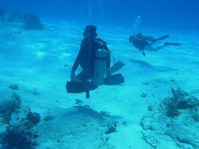 Diving Adventures Buceo
