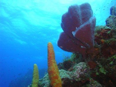 Diving Adventures Snorkel