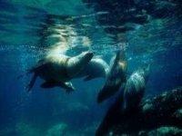 Snorkel junto a focas