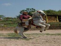 Equestrian Arts