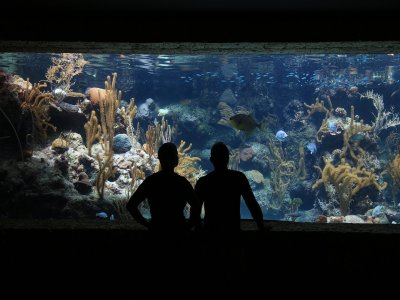 Marine Aquarium visit