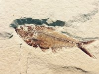 fossil 514 980 960 720