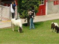 Pony for kids