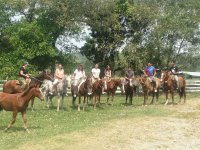 up to 11 horses
