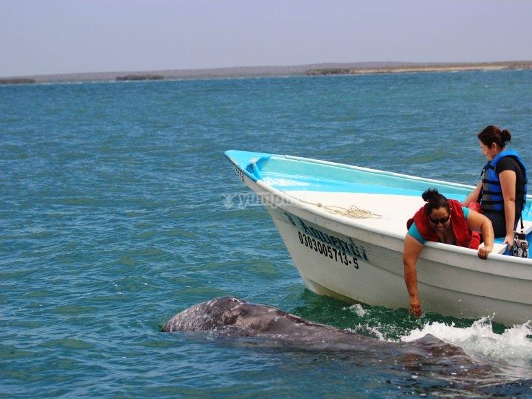 amistosas ballenas