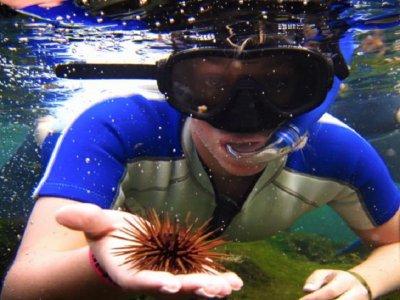Edventure Tours Snorkel