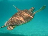 Wonderful marine species