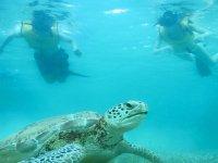 Observe the marine world