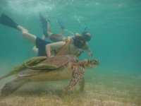 Immerse yourself in the marine world