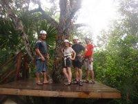 Platform in the tree
