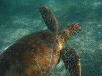 We found sea turtles snorkeling