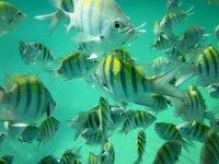 Tropical fish Logo edventure tours