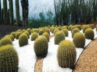 Jardin de cactaceas