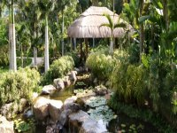 Between palm trees and orchids discover the tropical garden