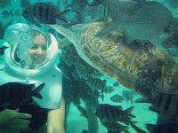 seatrek and turtles