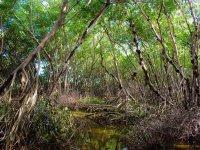 Mangrove in campeche