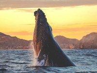Whale whatching en Baja California